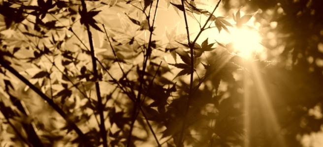 sun-through-trees-sepia narrow